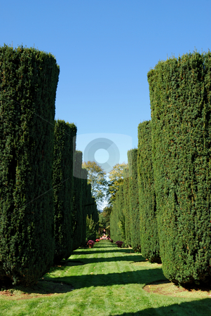 Green Bush Alley stock photo, Green bush alley on a sunny day by Denis Radovanovic