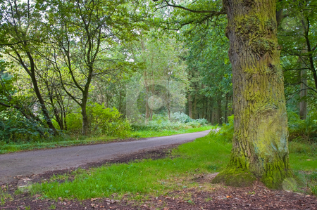 Vibrant forest stock photo, Fresh green vibrant forest with pathway running through by Karin Claus