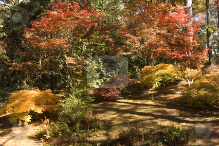 Fall Color stock photo, Took this picture at Calloway Gardens, Ga. by George Botta