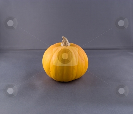 Pumkins stock photo, Pumpkin is a gourd-like squash of the genus Cucurbita and the family Cucurbitaceae (which also includes gourds) by Mariusz Jurgielewicz