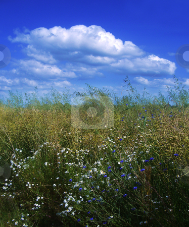 Meadow france stock photo, A flowery meadow in Normandy by Midas Mould