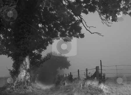 Misty lane normandy stock photo, Mist over normandy fields and trees by Midas Mould