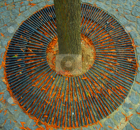 Wrought iron disc stock photo, Autumn leaves gather in the grid at the bottom of an urban tree by Midas Mould