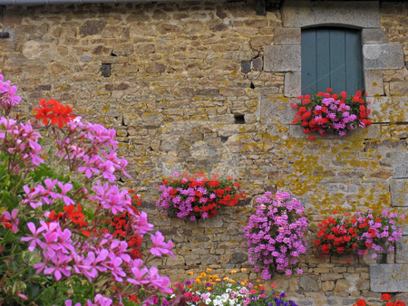 Le Haut de la Lande, House wall with flowers, Brittany, Northern France stock photo, Le Haut de la Lande, House wall with flowers, Brittany, Northern France by Lothar Hinz