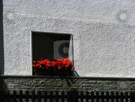 Window stock photo, A windowwith many red flowers on a gray wall by Fabio Alcini