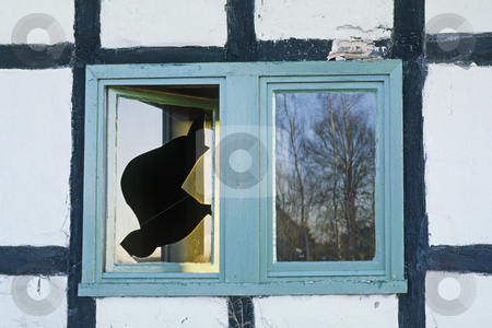 Broken glasses stock photo, Broken glasses, broken window by Lothar Hinz