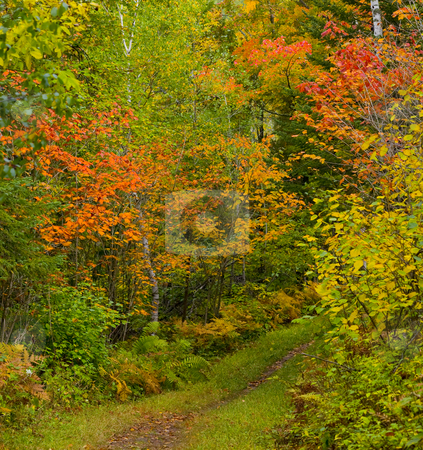 September Colors stock photo, September colors in the North Woods of Minnesota by John McLaird