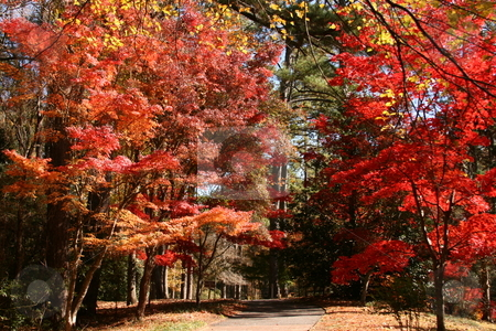 Zen Trail stock photo, Love fall for the awesome colors. I took this at Callaway Gardens, Pine Mountain,ga. by George Botta