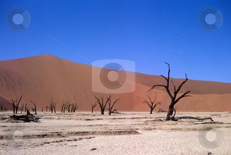 Sand desert stock photo, Panoramic view on sand desert by Seregey Korotkov