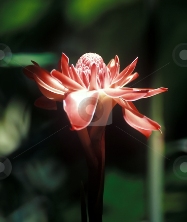 Orchid stock photo, Beautiful single flowers orchid in Borneo jungle by Seregey Korotkov