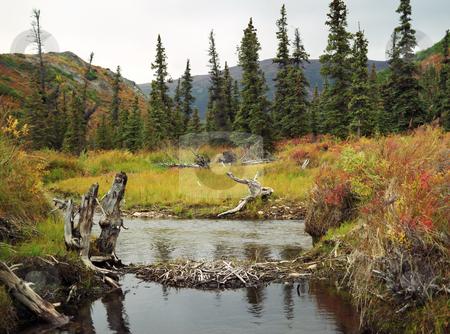 Autumn stock photo, Autumn in Denali national park Alaska by Seregey Korotkov