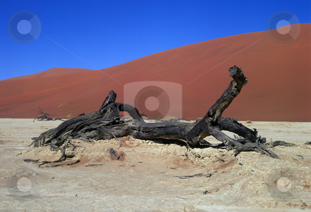 Panorama Namib desert stock photo, Panoramic view on Namib desert by Seregey Korotkov