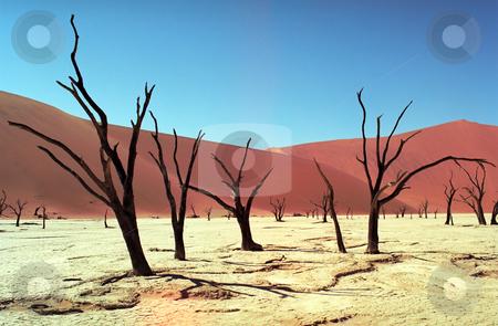 Namib desert stock photo, Panoramic view on Namib desert in Sossusvlei by Seregey Korotkov