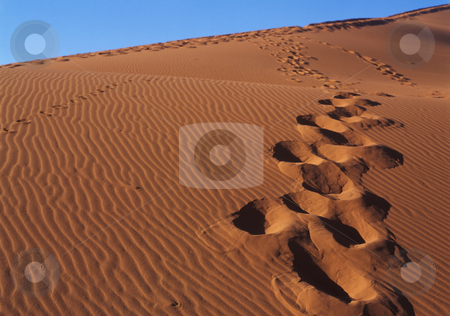 Footprint on sand stock photo, Footprint sand dunes in the Namib Desert by Seregey Korotkov