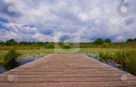 Lily pond with clouds stock photo, Pond with pier covered with lilies on a cloudy day by Karin Claus