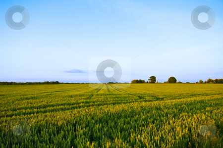 Farmland scape stock photo, Rural landscape almost ready for the harvest with blue sky by Karin Claus