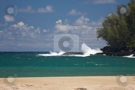 Tropical Shoreline and Trees stock photo, Tropical Shoreline and Trees on Kauai, Hawaii by Andy Dean