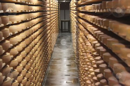 Stored Cheese stock photo, Round stacks of cheese stored on shelves in factory warehouse by Kheng Guan Toh
