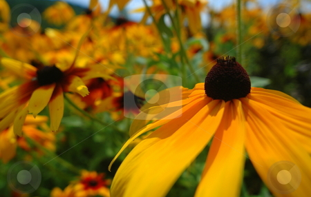 Yellowish Flowers stock photo,  by Richard Sheehan