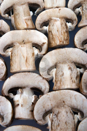 Organic mushrooms stock photo, A small group of organic mushrooms in a row by Paul Phillips