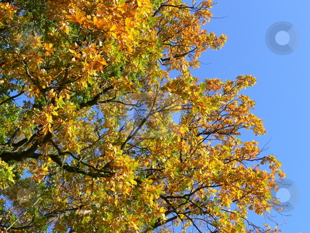 Leaves colouring in autumn stock photo, Leaves colouring in autumn by Lothar Hinz