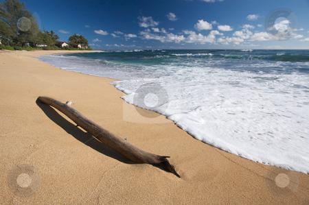 Tropical Shoreline stock photo, Tropical Shoreline and Driftwood on Kauai, Hawaii by Andy Dean