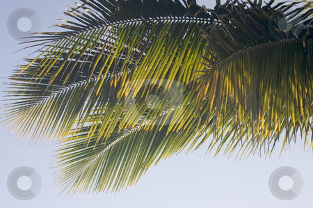 Backlit Palm Leaves stock photo, Backlit Palm Leaves on a Summer Day by Andy Dean