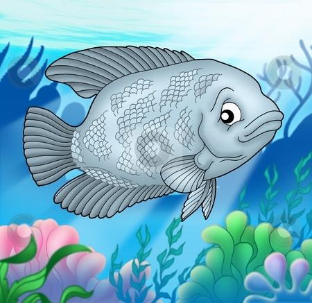 Big Urama fish stock photo, Big Urama fish - color illustration. by Klara Viskova