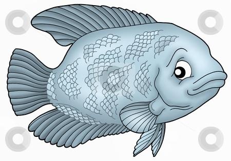 Gurama fish stock photo, Blue Gurama fish - color illustration. by Klara Viskova