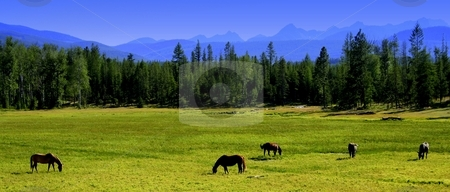 Grazing horses  stock photo, Horses grazing with Mission Mountains in the back groud. Taken in the Seeley/Swan Valley. by Brian Johnson