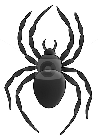 Spider stock photo, Spider on white background - illustration. by Klara Viskova