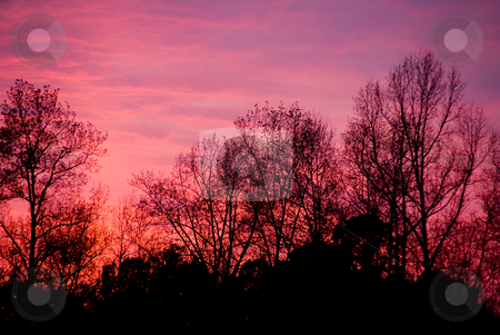 Sunset Forest stock photo, A blazingly colorful sunset over a forest in the winter. by Robert Byron