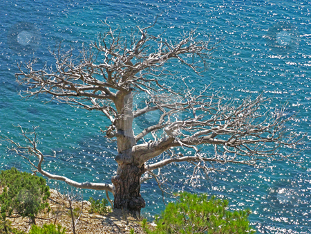 Tree without leaves and sea stock photo, Tree without leaves on the beach of the summer sea by Roman Vintonyak