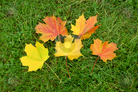 Leaves stock photo, Pile of yellow and red autumn leaves by Joanna Szycik