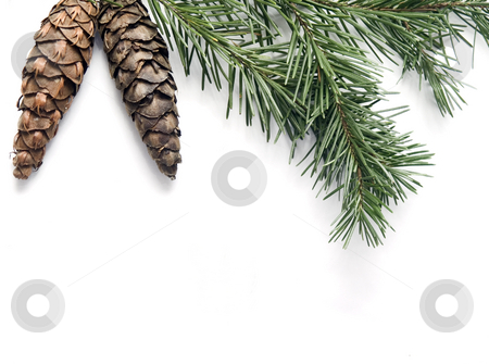 Pine Cone Background stock photo, Pine Cone Background by John Teeter