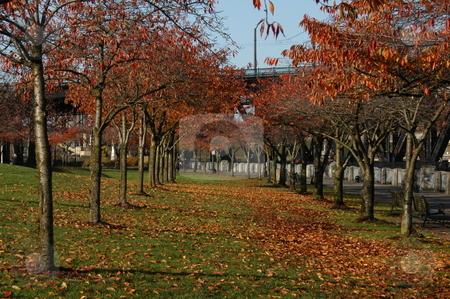 Fall in Portland Oregon stock photo, Fall scene in Portland Oregon by Tim Markley