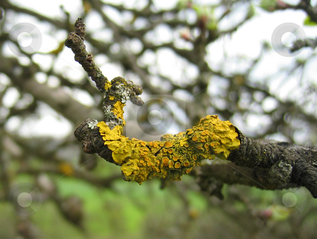 Moss on branch stock photo,  by Wolfgang Heidasch