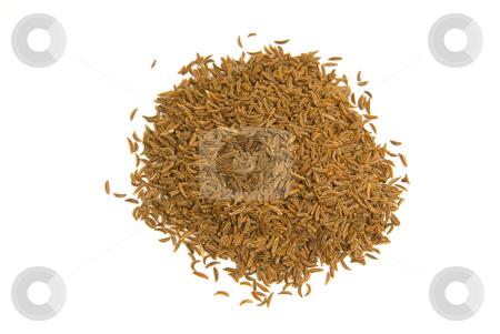 K?mmel (Carum carvi) - Caraway or Persian cumin stock photo, K?mmel, botanisch Wiesenk?mmel oder Gemeiner K?mmel (Carum carvi), ist eines der ?ltesten Gew?rze in der Familie der Doldenbl?tler (Apiaceae). - Caraway or Persian cumin (Carum carvi) is a biennial plant in the family Apiaceae, native to Europe and western Asia. by Wolfgang Heidasch
