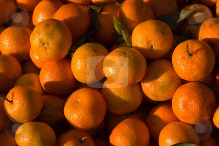 Clementine (Citrus ? aurantium) stock photo, Als Clementine (Citrus ? aurantium) bezeichnet man eine Gruppe von Hybriden aus der Gattung der Zitruspflanzen (Citrus). Die Clementine ist eine Hybride zwischen Mandarine (Citrus reticulata) und Orange (Citrus sinensis). by Wolfgang Heidasch