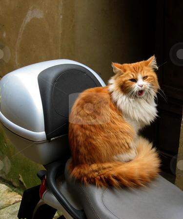 Katze in Volterra Toskana Italien stock photo,  by Wolfgang Heidasch
