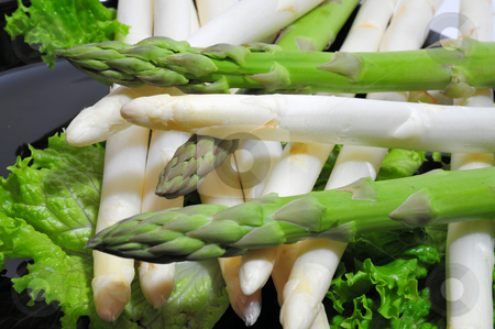 Asparagus Green And White stock photo, Green and white asparagus on a bed of lettuce by Lynn Bendickson