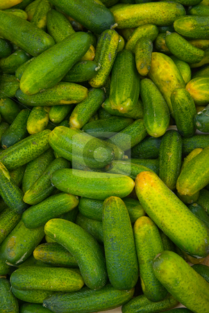 Gurke (Cucumis sativus) - Cucumber stock photo, Die Gurke (Cucumis sativus) ist eine Art aus der Familie der K?rbisgew?chse. - The cucumber (Cucumis sativus) is a widely cultivated plant in the gourd family Cucurbitaceae, which includes squash, and in the same genus as the muskmelon. by Wolfgang Heidasch
