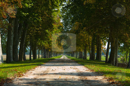 Allee stock photo, Allee by Wolfgang Heidasch