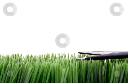 Cutting the grassCutting the grass stock photo,  by Vince Clements