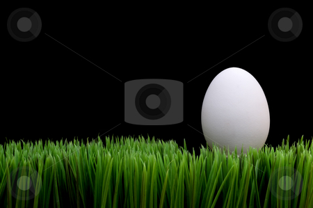 White egg on grass stock photo, White egg on grass on a black background by Vince Clements