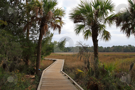 Walkway Thru The Marsh stock photo, Wooden boardwalk trailing thru the marsh lands of Savannah Georgia by Jack Schiffer