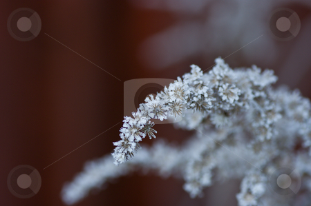 Frosty Plant stock photo, A frost covered plant in the middle of the winter by Peter Soderstrom