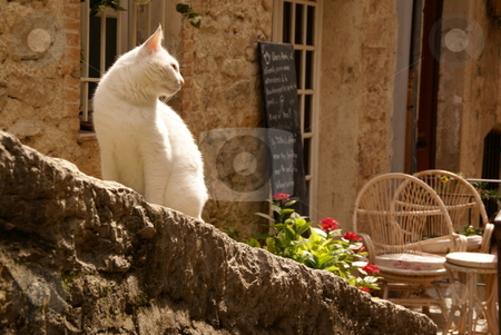 Aloof stock photo, A picture postcard shot of a cat in an alleyway of a hill-top town in France, sat on a wall outside an idyllic looking cafe. by Tim Green