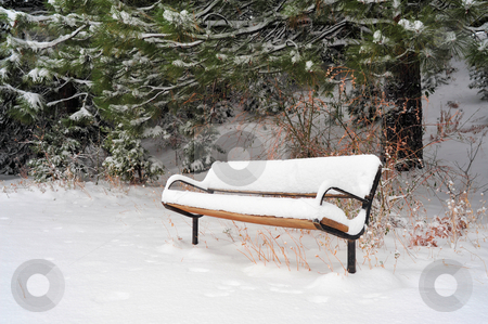 Snow Covered Bench stock photo, A sitting bench covered with snow in early winter with pine trees in the background by Lynn Bendickson