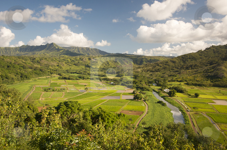 Hanalei Valley and Taro Fields stock photo, Hanalei Valley and Taro Fields on Kauai, Hawaii by Andy Dean